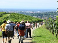 Der 21. Offenburger Weinwandertag Wein und Genuss im Offenburger Rebland