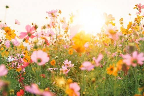Ein Traum von Sommerfrische