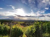 Offenburger Weinwandertag ist abgesagt – als Ersatz gibt es das Weinwanderpaket zum selbst erwandern