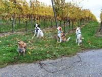 Hundebesitzer aufgepasst – tierisch guter Dienst in der Ortenau!
