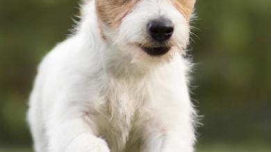 Neue Sorten speziell für kleine Hunde!!!
