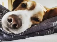 Corona konform unterwegs mit Hund