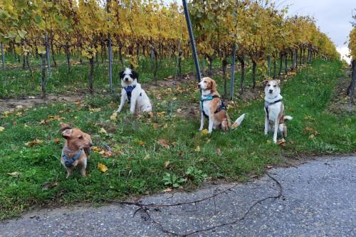 Grether Katja - mobile Haustierbetreuung & Gassi Service / Dogwalking