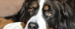 Ein Tier aus dem Tierschutzverein