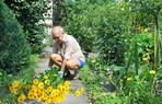 Terrasse und Gartenpflege, G�rtnerei und Baumschule.
