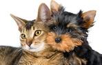 Haustiere, Hundezucht, Fischzucht und mehr.